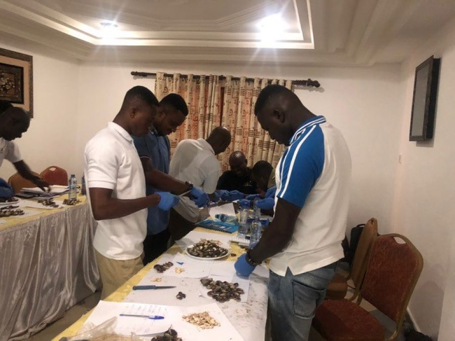 20 GHANA COMMODITY EXCHANGE COMMODITY GRADERS TRAINED TO GRADE CASHEW AND MANAGE QUALITY BY GSA – WITH THE SUPPORT OF UNIDO (GHANA COUNTRY OFFICE) image